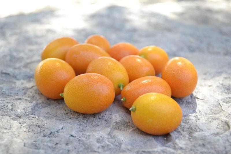 Los Mejores Botánicos para tu Gin Tonic - El Blog de